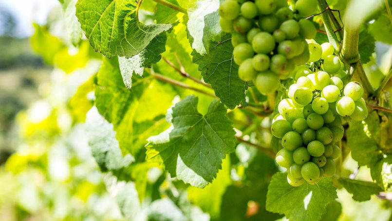7 Great Vineyard Tours in England