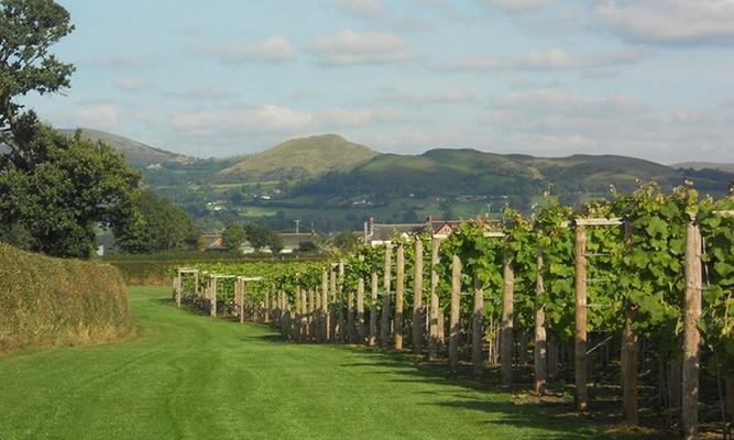 Kerry Vale Vineyard