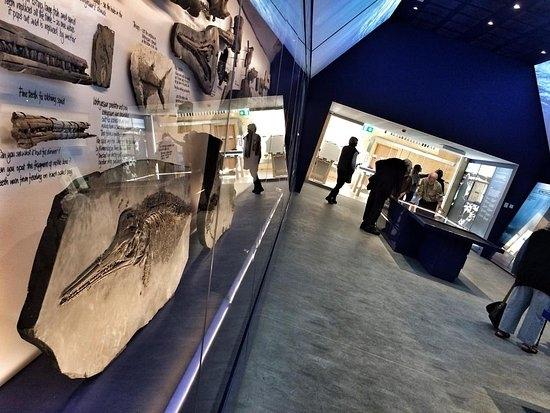 Museum of Jurassic Marine Life