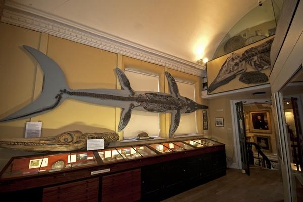 Lyme Regis Museum
