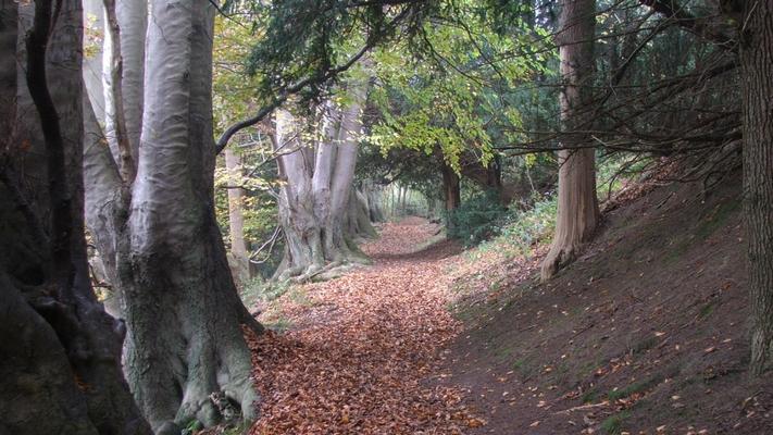 Wilmote hill walk on the Ightham Mote estate